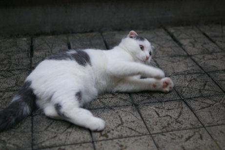 IMGP2113ー猫