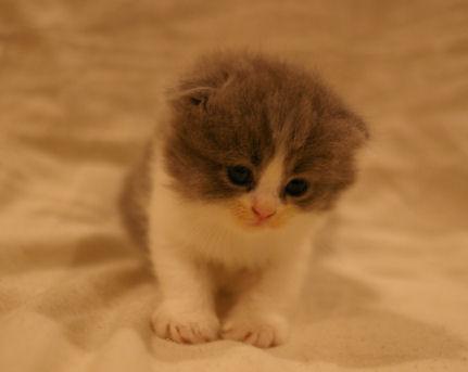 IMGP4171ー猫