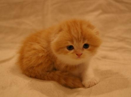 IMGP4187ー猫