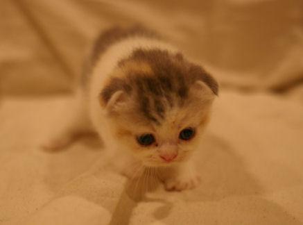 IMGP4193ー猫
