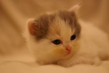 IMGP4222ー猫