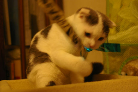 IMGP2163-猫