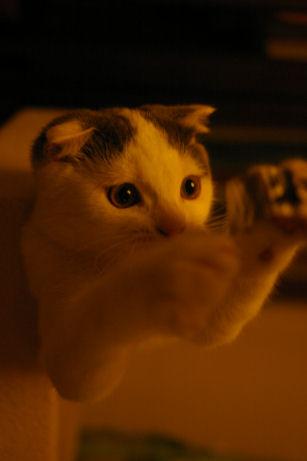IMGP2165ー猫