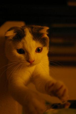 IMGP2166ー猫