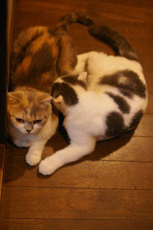 IMGP2204ー猫