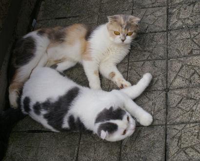 IMGP2209ー猫