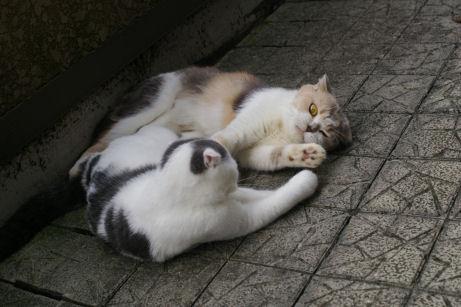 IMGP2210-猫