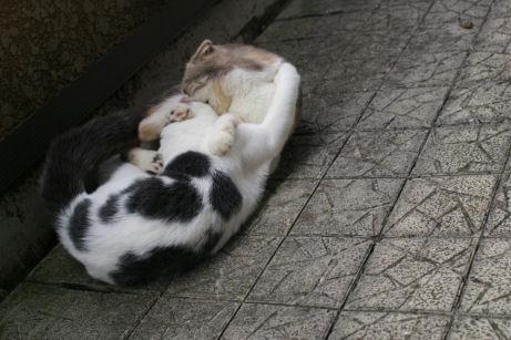 IMGP2215ー猫