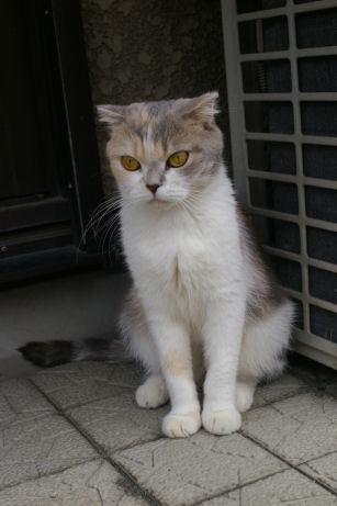 IMGP2220ー猫