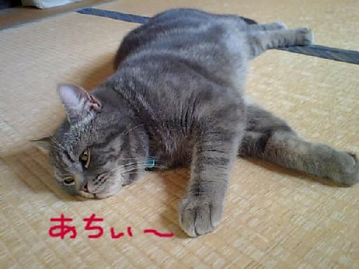 20110502あちぃ