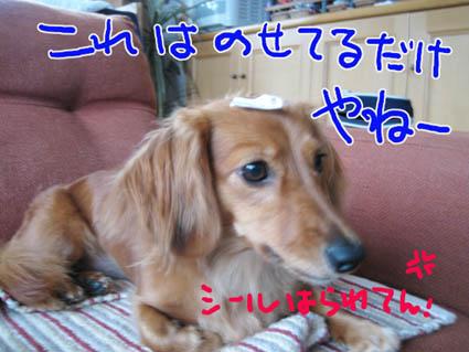 BLOG090604.jpg