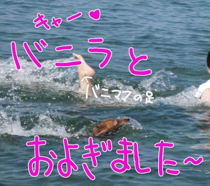 BLOG81704.jpg