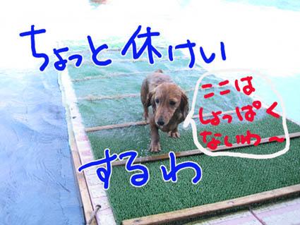 BLOG81902.jpg