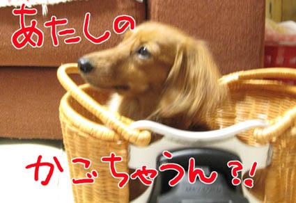 BLOG82106.jpg