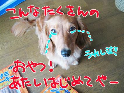 BLOG82904.jpg