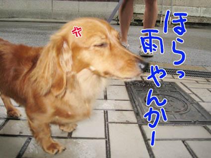 BLOG83001.jpg