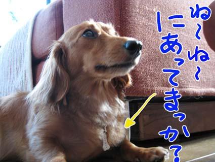 blog081009.jpg