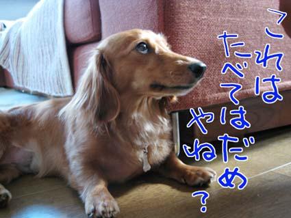 blog081010.jpg