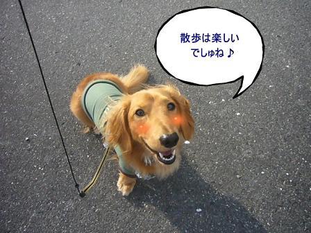 散歩楽しいでしゅね!