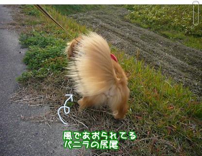風であおられる尻尾!