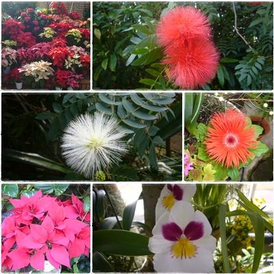 フラワーセンター(花)