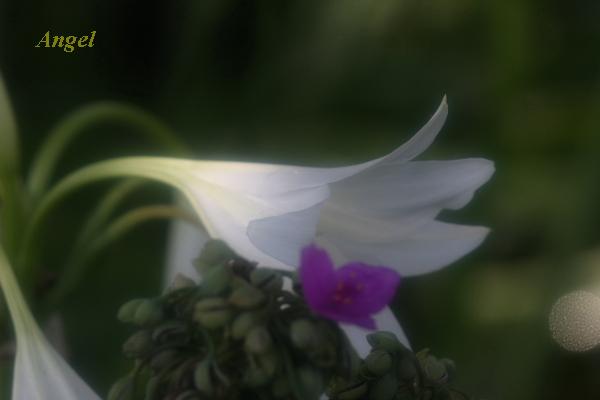 ハマユウAngel3-①