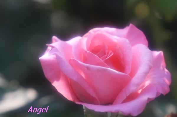 桃香Angel2