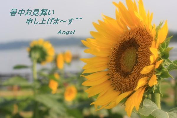ひまわりAngel1