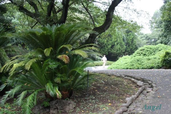 小石川植物園Angel1