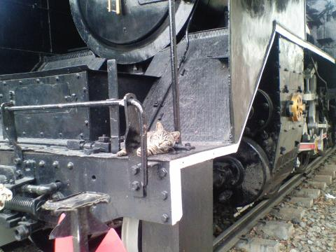 機関車ねこ