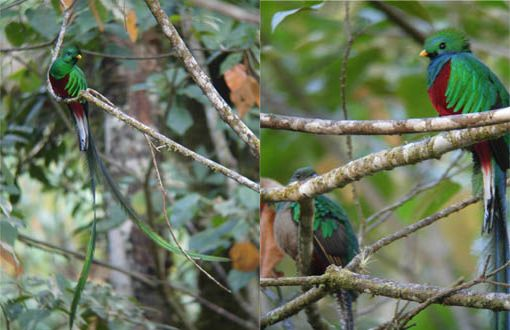 Quetzal by Kase
