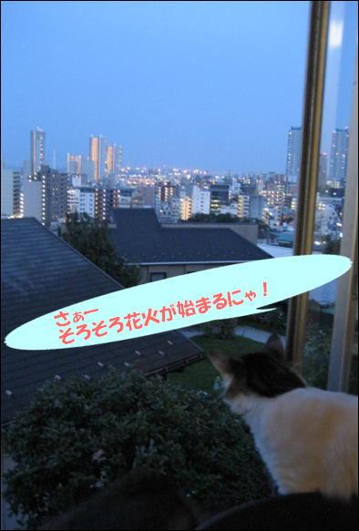 花火 004