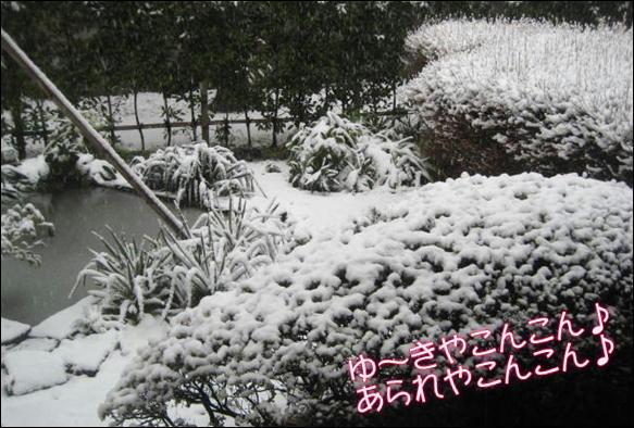 雪 010