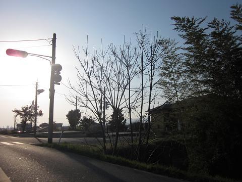 2011032611.jpg