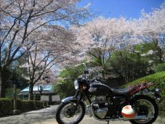 2009sakura-w1.jpg