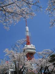 2009sakura-w2.jpg