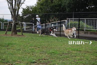 アッシュ走る・・・