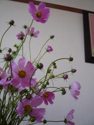 kosumosu・120_convert_20111013192905