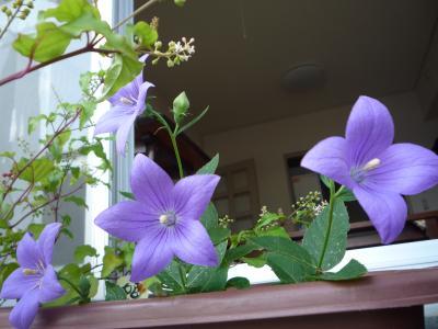 kikyou_convert_20110913215507.jpg