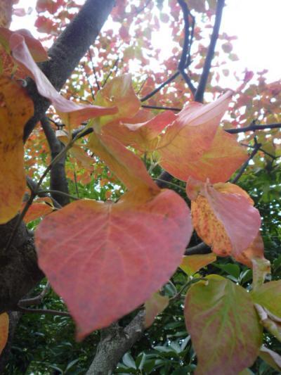 kouyou118_convert_20111013193048.jpg