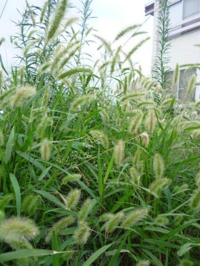 kusa_convert_20110809180819.jpg
