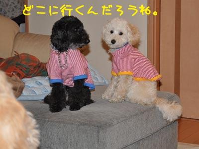 DSC_0008_20110504204204.jpg