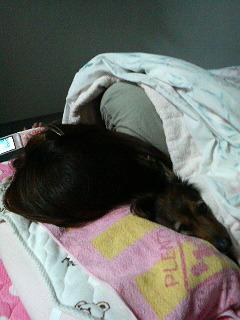 寝てるワンよ~