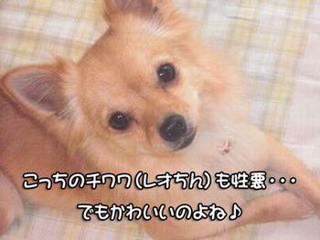 画像-004