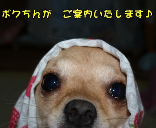 DSC01726_convert_20090720104505.jpg