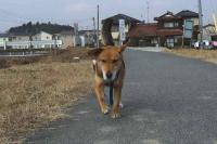 散歩20120127-3