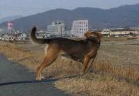 散歩20120127-4