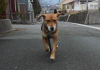 散歩20120222-3