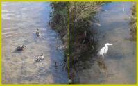 散歩20111125-3