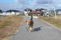 散歩20111125-4